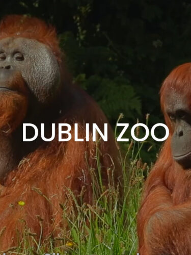 The Festival of Curiosity at Dublin Zoo